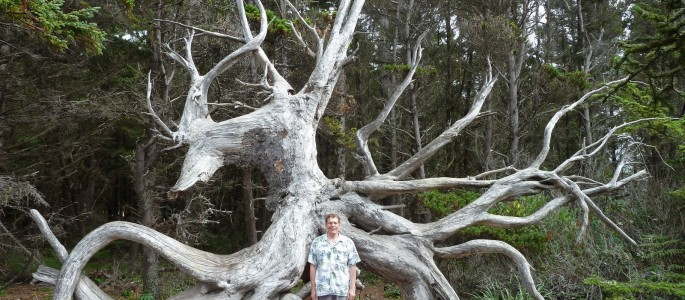 Man standing in front of tree roots shows their huge size